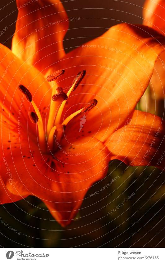 Sag's durch die Blume II Pflanze Blatt Blüte Wachstum Rose Blühend Blumenstrauß Duft Tulpe exotisch Blütenknospen Orchidee Kaktus Grünpflanze Nutzpflanze