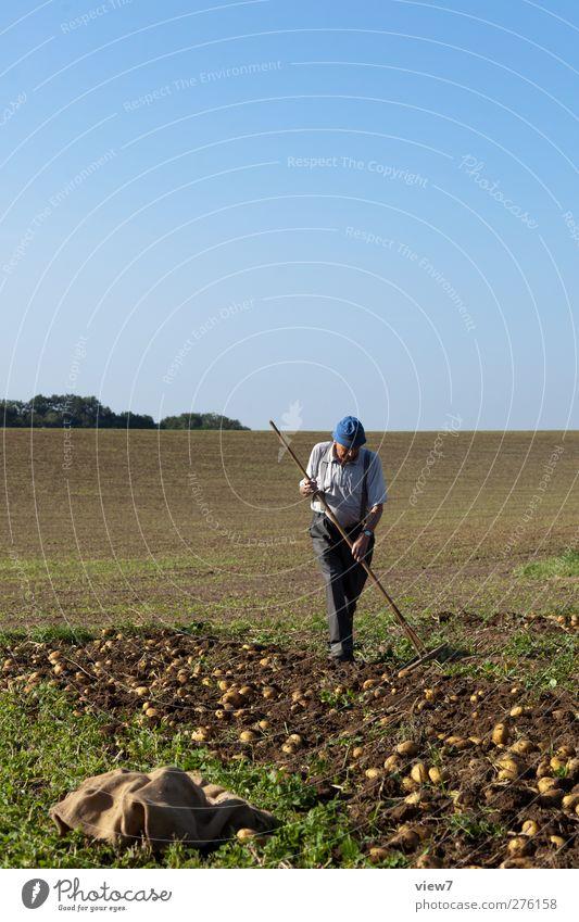 Kartoffelernte Mensch Natur Sommer Pflanze Erwachsene Landschaft Herbst Senior Arbeit & Erwerbstätigkeit Erde Zufriedenheit Feld warten maskulin frisch