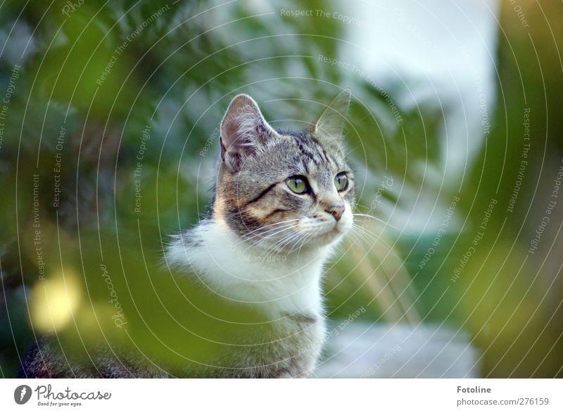 unser kleiner Asylant Katze Natur weiß grün Sommer Baum Pflanze Tier Blatt Umwelt Auge grau Garten natürlich weich Ohr