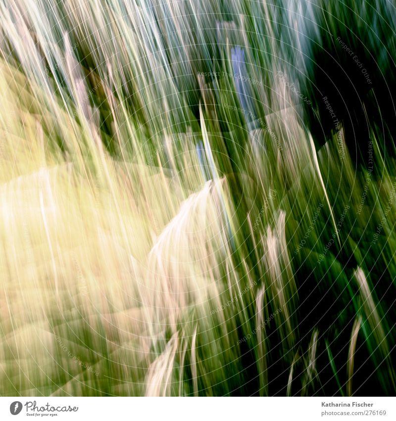Artfields Umwelt Natur Landschaft Pflanze Gras Sträucher Grünpflanze Nutzpflanze Wildpflanze Wiese blau braun mehrfarbig gelb gold grau grün violett rosa rot