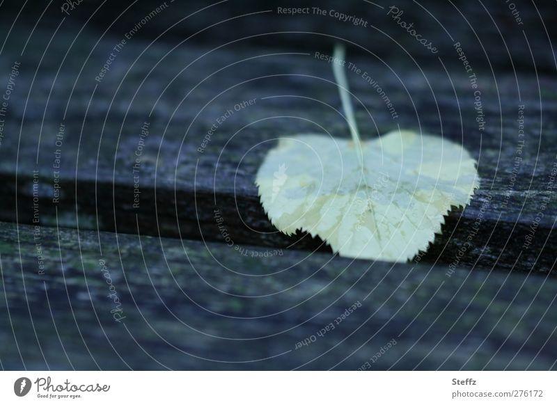 Sommerende Einsamkeit dunkel Traurigkeit Herbst Tod grau Stimmung Regen trist nass Vergänglichkeit Wandel & Veränderung Trauer Verfall Herbstlaub herbstlich