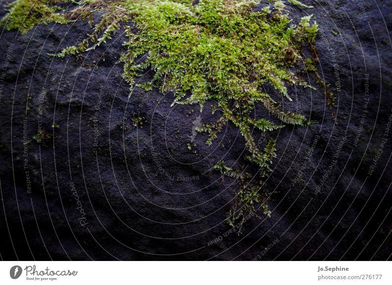 Bryophyta Natur grün Pflanze schwarz Umwelt dunkel Stein Klima Wachstum frisch feucht Moos bewachsen Widerstandskraft