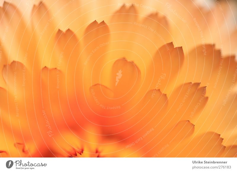 Let the sunshine in Natur schön Sommer Pflanze Blume gelb Wärme Blüte Garten Gesundheit natürlich Wachstum frisch Fröhlichkeit ästhetisch leuchten