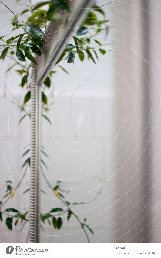 AST5 | Tante Polly's Spiegel weiß grün Pflanze Wohnung Wachstum Dekoration & Verzierung Häusliches Leben Bad Fliesen u. Kacheln hängen Grünpflanze Spiegelbild