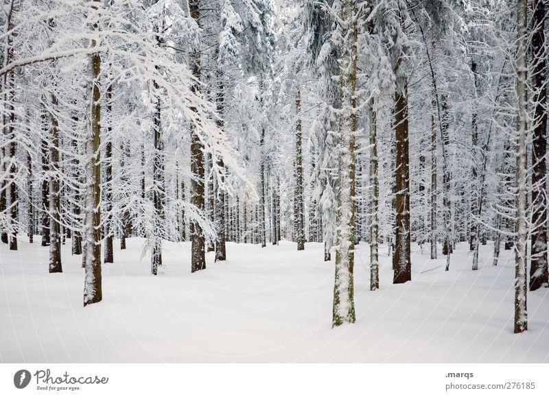 Kühl Umwelt Natur Landschaft Pflanze Winter Klima Klimawandel Eis Frost Schnee Baum Wald kalt schön weiß Gefühle Farbfoto Außenaufnahme Menschenleer