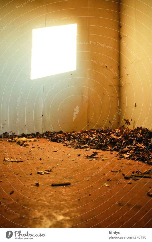 Kleiner Lichtblick Raum leuchten alt dreckig kaputt Verfall Wandel & Veränderung Herbstlaub Zimmerecke unordentlich Farbfoto Innenaufnahme Menschenleer