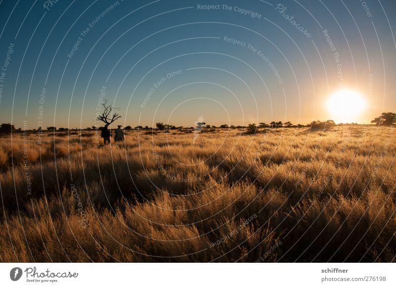 Kalahari Umwelt Natur Landschaft Wolkenloser Himmel Sonnenaufgang Sonnenuntergang Sonnenlicht Schönes Wetter Dürre Pflanze Gras Sträucher Wüste ruhig ästhetisch