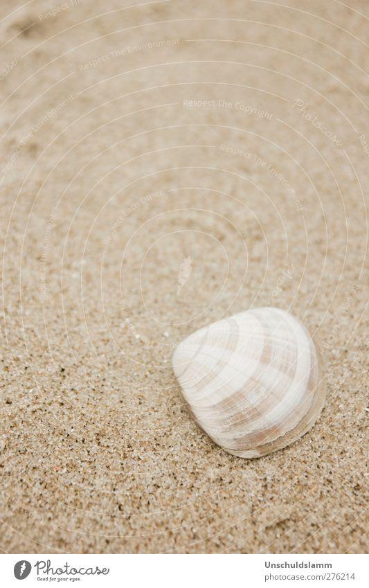Klein und Kariert Natur weiß Ferien & Urlaub & Reisen schön Sommer Meer Strand Erholung Umwelt Leben klein Sand hell Gesundheit braun natürlich