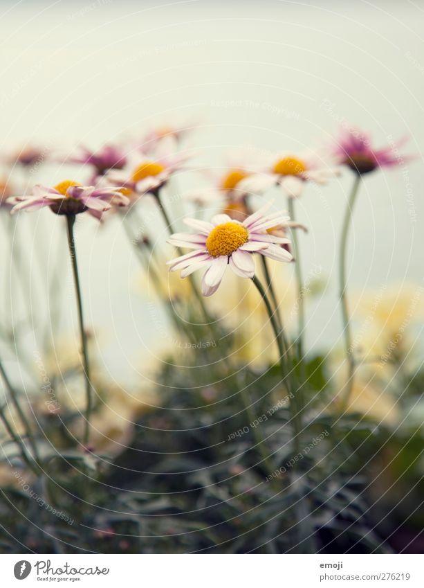 pastellig Natur Pflanze Blume Landschaft Umwelt Frühling natürlich Pastellton