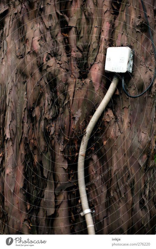 Ökostrom Energiewirtschaft Kabel Erneuerbare Energie Energiekrise Baum Holz Problemlösung nachhaltig Natur Baumrinde angeklebt Leitung brilliant Idee anzapfen