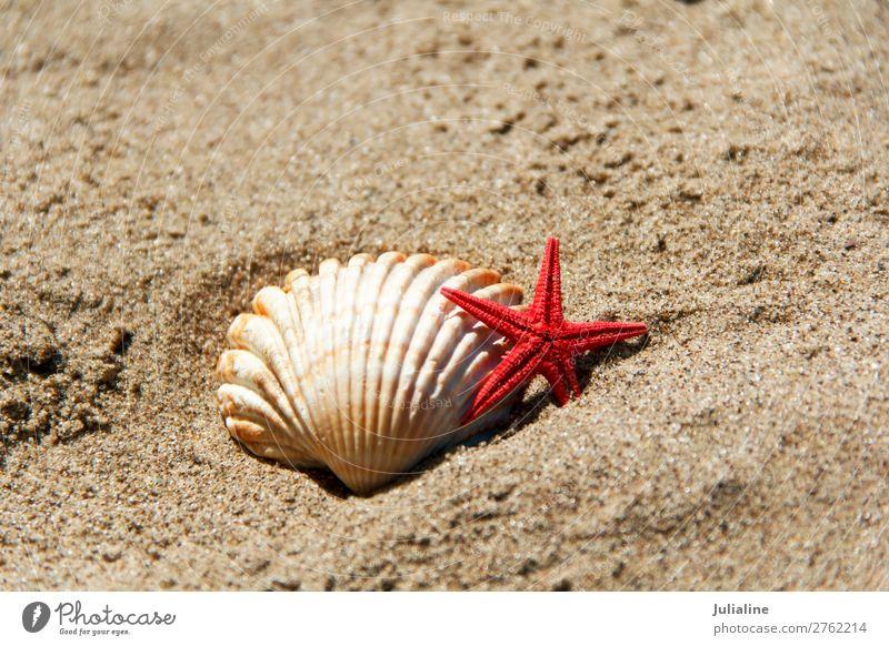 Sommer rot Meer Strand Sand horizontal Panzer Spa Waschbecken Seestern