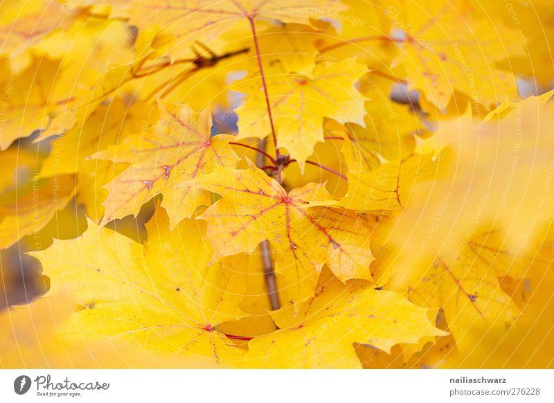 Gelb Natur Baum Pflanze Farbe Blatt Landschaft gelb Umwelt Herbst Ast