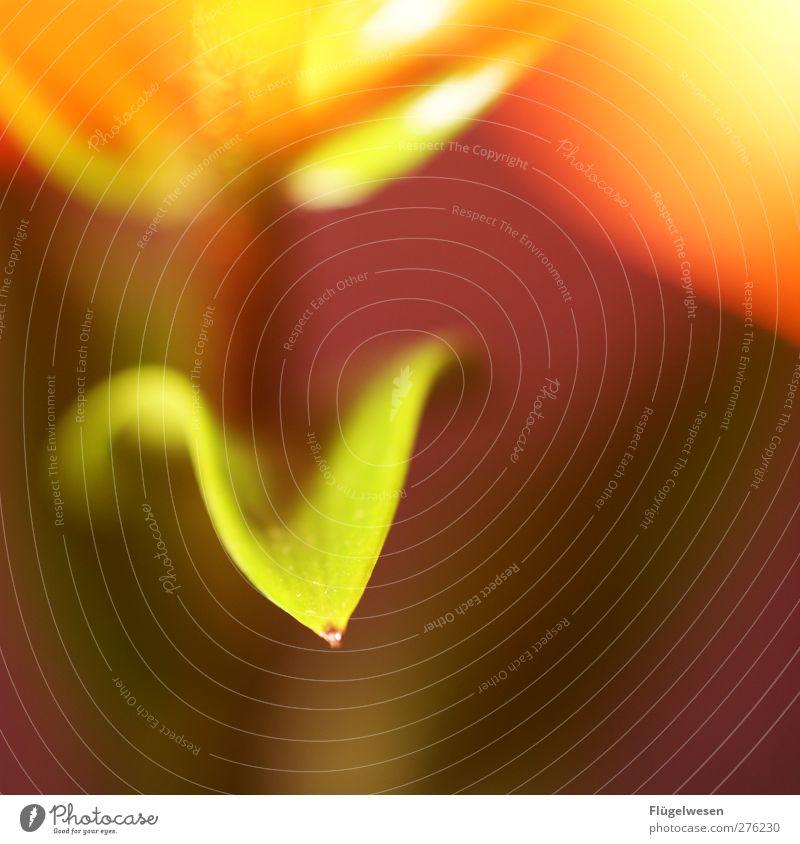 7. Bild in Folge ohne Kommentar? Ferien & Urlaub & Reisen Sommer Pflanze Blume Blatt Gras Blüte Wachstum Sträucher Rose Wellness Blühend Blumenstrauß Duft Tulpe