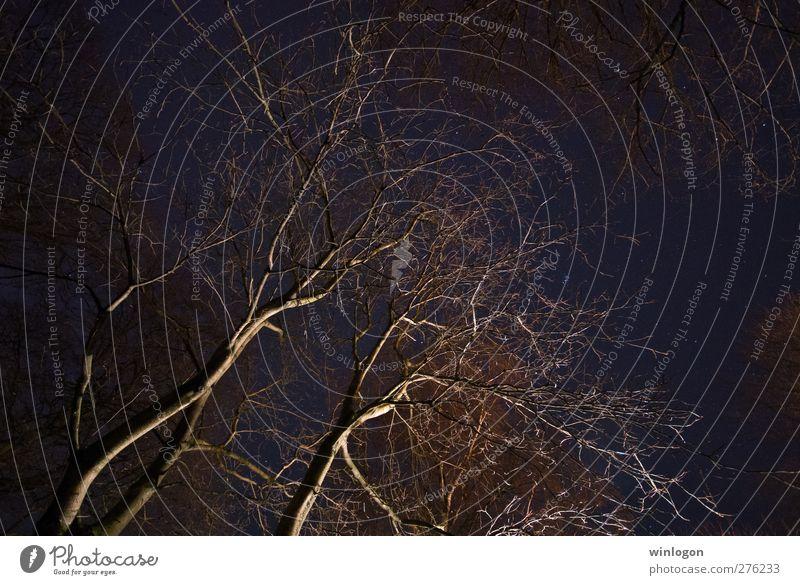 Baumkronen in der Nacht Natur Himmel Europa Deutschland dunkel hoch blau schwarz Stern Sternenhimmel Langzeitbelichtung Weltall Erde Blick oben aufwärts träumen
