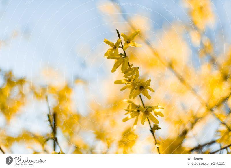 Gelb! Natur Pflanze blau schön Farbe Sommer Blume ruhig gelb Leben Blüte Gefühle Frühling Gesundheit Tod Garten