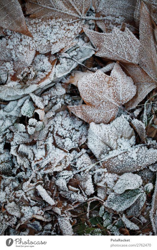 #A# Waldfrost Kunst Kunstwerk ästhetisch Blatt Laubwald Frost Winter kalt Kälteschock Farbfoto Gedeckte Farben Außenaufnahme Nahaufnahme Detailaufnahme