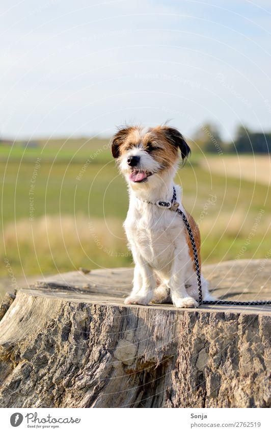 Kleiner Hund auf einem Baumstamm Lifestyle Sommer Sonne Natur Landschaft Himmel Sonnenlicht Schönes Wetter Tier Haustier 1 Lächeln sitzen Glück niedlich