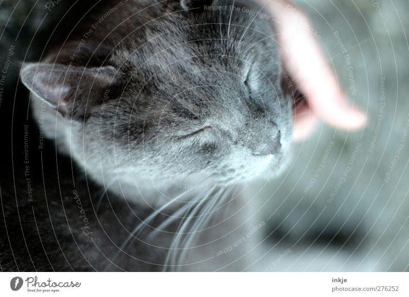 Katzenleben [genießen] Katze Tier Erholung Gefühle Stimmung Zusammensein Zufriedenheit Warmherzigkeit Sicherheit niedlich Schutz genießen Vertrauen Tiergesicht Haustier Geborgenheit