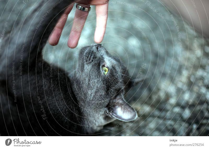 Katzenleben [ spielen ] Freude Tier Spielen Gefühle Freundschaft Stimmung liegen Freizeit & Hobby niedlich Tiergesicht Partnerschaft Haustier kämpfen Sympathie