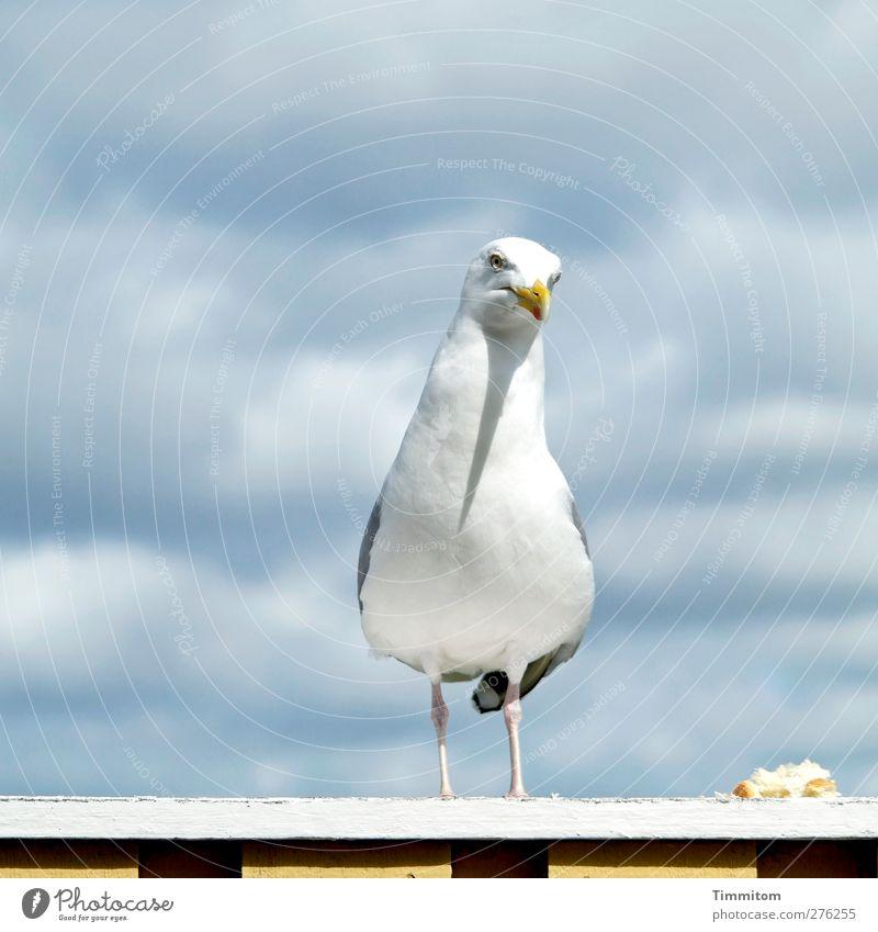Was iss? Natur weiß Ferien & Urlaub & Reisen Tier grau Vogel Wildtier stehen beobachten einfach Möwe Terrasse füttern Dänemark Misstrauen