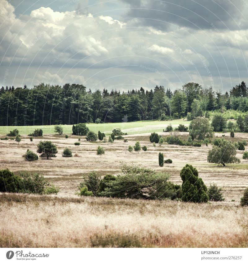 Sicht auf...am Arsch der Heide Natur Ferien & Urlaub & Reisen Pflanze Sommer Baum Landschaft Tier Wald Umwelt Gras Freiheit Tourismus Ausflug Duft Umweltschutz