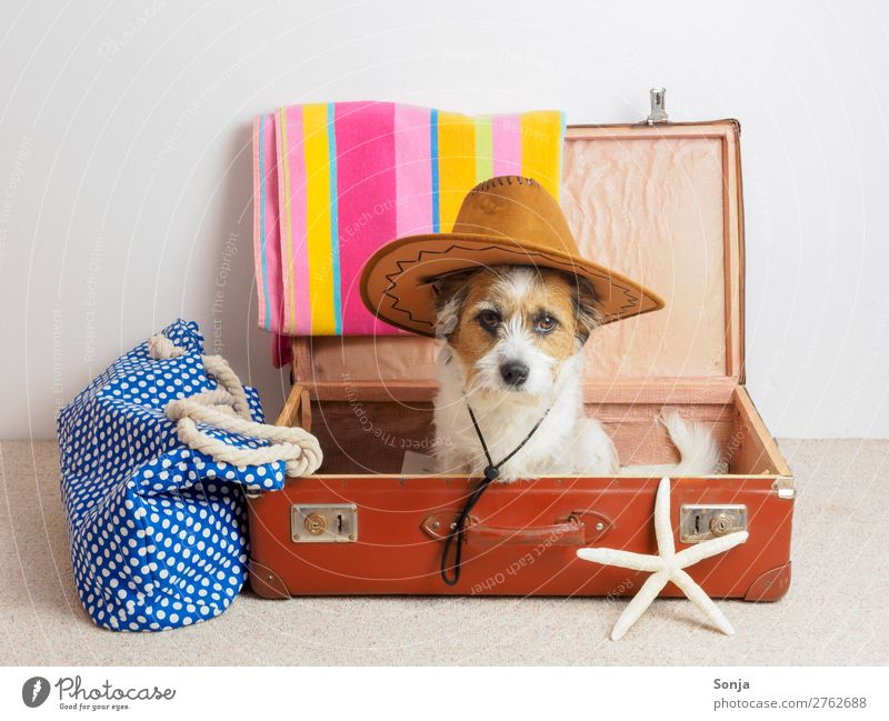 Hund mit Sonnenhut in einem Koffer Ferien & Urlaub & Reisen Tier Ferne lustig Tourismus sitzen Sommerurlaub Haustier trendy Vorfreude maritim Seestern Badetuch
