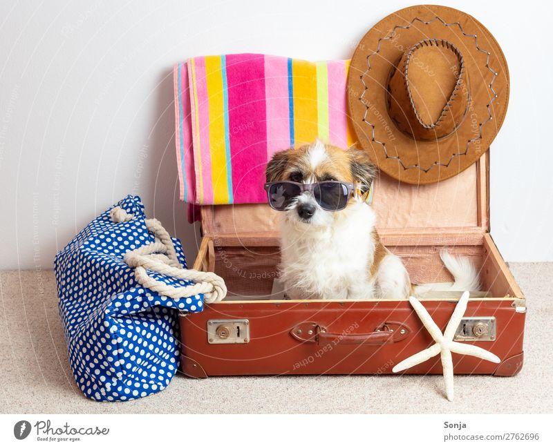 Hund mit Sonnenbrille in einem Reisekoffer Ferien & Urlaub & Reisen Sommer Meer Tier Freude Ferne Strand Lifestyle lustig Tourismus Freizeit & Hobby sitzen