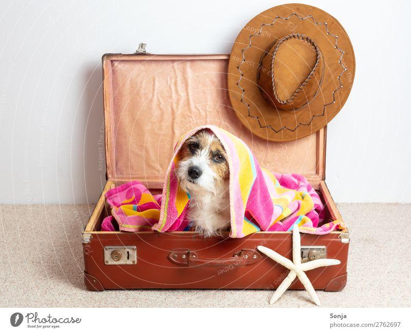 Hund in einem Reisekoffer Lifestyle Ferien & Urlaub & Reisen Tourismus Sommer Sommerurlaub Hut Tier Haustier 1 Sonnenhut Seestern Lederkoffer Badetuch sitzen