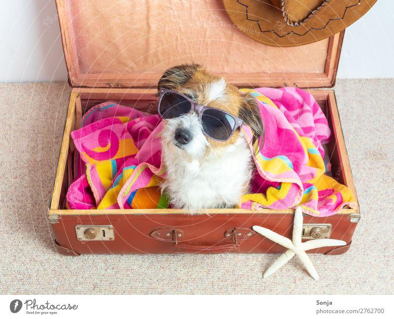 Hund mit Sonnenbrille in einem Reisekoffer Ferien & Urlaub & Reisen Tier Ferne sitzen Abenteuer Lebensfreude Sommerurlaub Fernweh Haustier trendy Koffer maritim