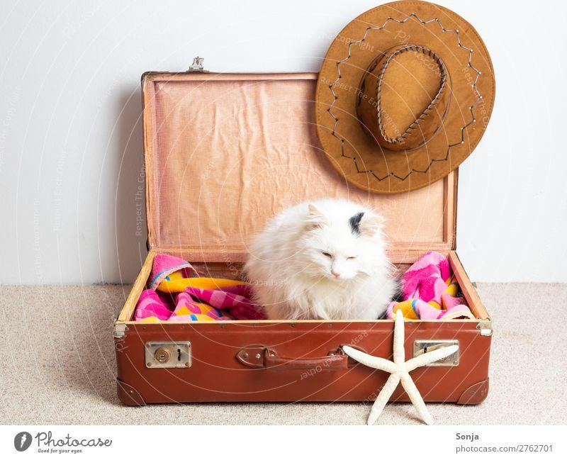 Katze in einem Reisekoffer Ferien & Urlaub & Reisen Tourismus Ferne Sommerurlaub Tier Haustier 1 Koffer Sonnenhut Seestern sitzen frech schön lustig maritim