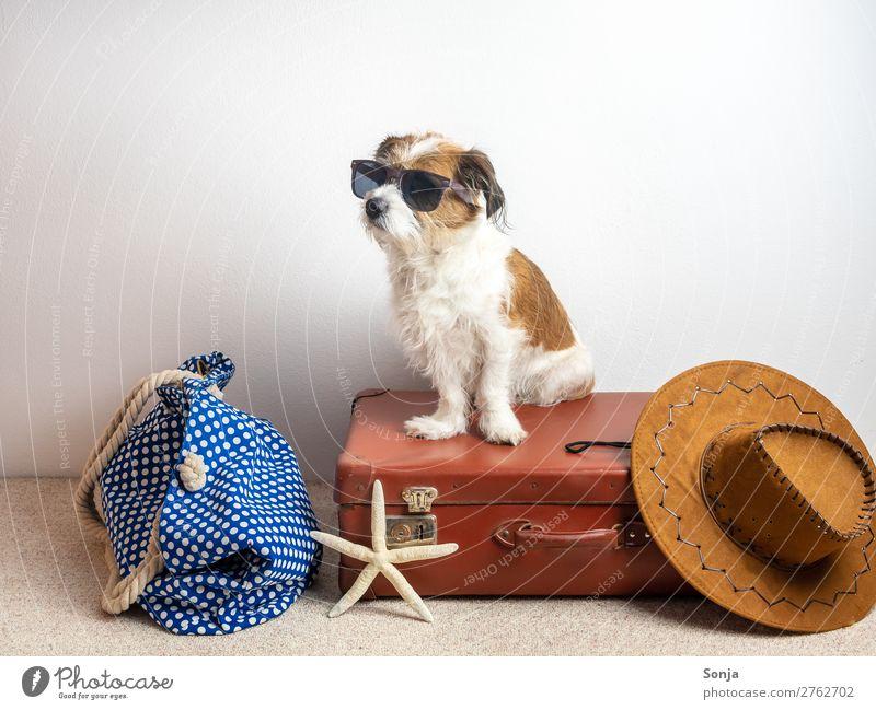 Hund auf einem Reisekoffer Lifestyle Ferien & Urlaub & Reisen Ferne Sommerurlaub Hut Tier Haustier 1 Koffer Seestern Sonnenhut Badetasche sitzen maritim