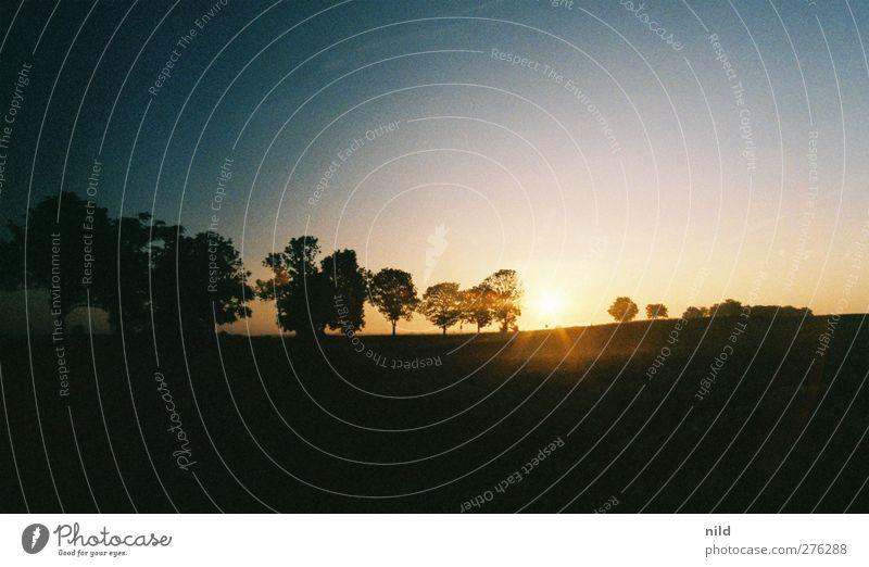 Roadtrip 2012 Erholung ruhig Ferien & Urlaub & Reisen Freiheit Sommer Umwelt Natur Landschaft Wolkenloser Himmel Schönes Wetter Baum Park blau schwarz