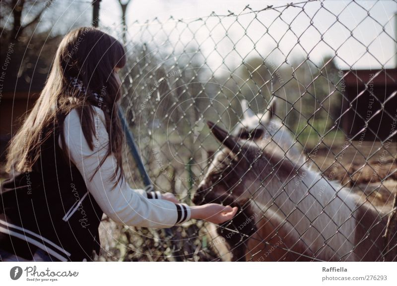 ein tag wie kein anderer feminin Junge Frau Jugendliche Körper Haare & Frisuren Arme Hand 1 Mensch 18-30 Jahre Erwachsene Jacke brünett langhaarig Pony Tier