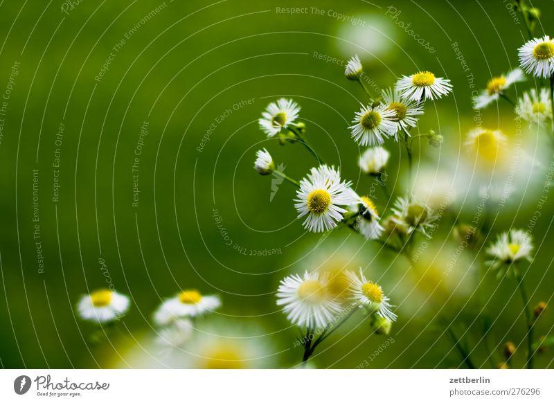 Blümli Natur grün schön Sommer Pflanze Blume Blatt ruhig Erholung Umwelt Blüte Garten Stil Wetter Zufriedenheit Klima