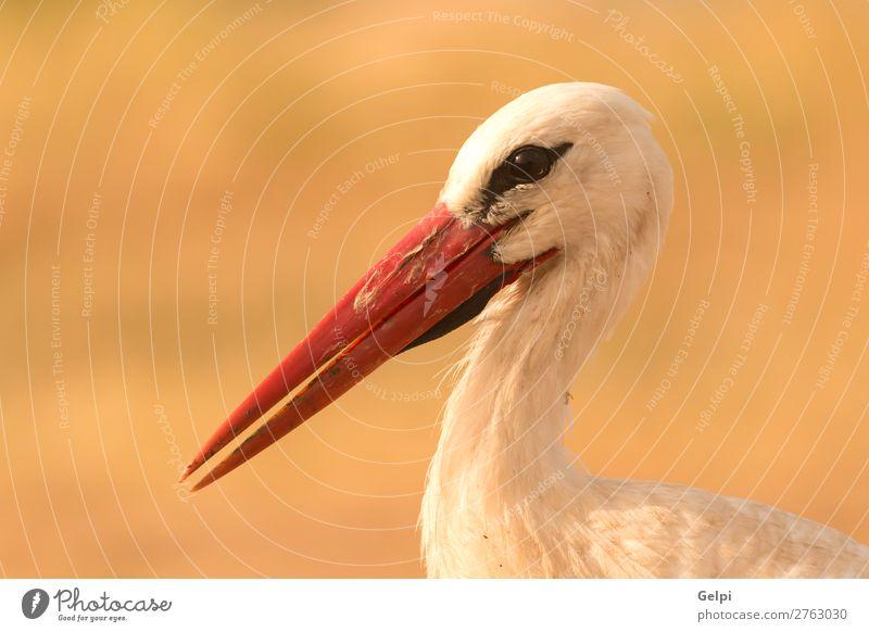 Porträt eines eleganten Storches schön Freiheit Paar Erwachsene Natur Tier Wind Blume Gras Vogel fliegen lang wild blau grün rot schwarz weiß Farbe Zusammenhalt