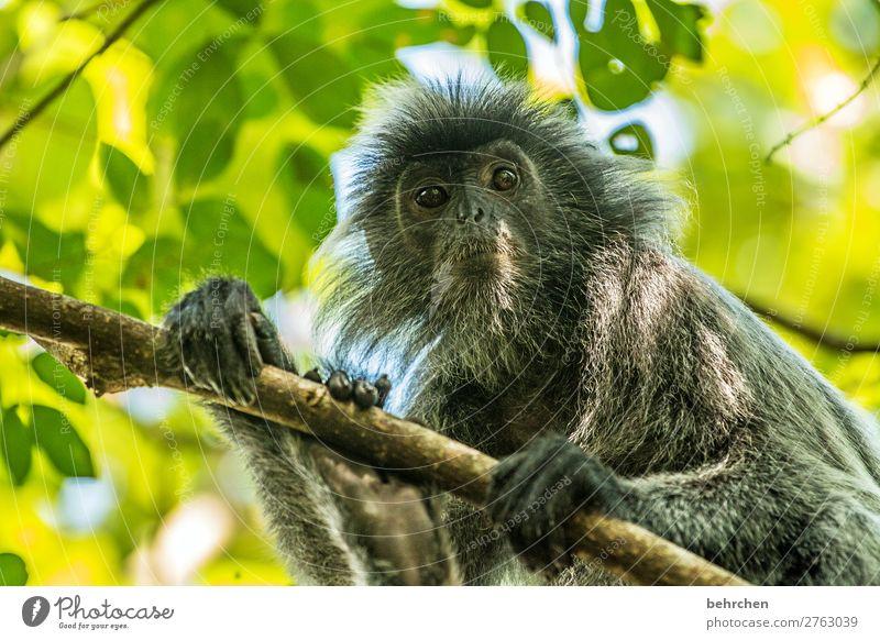 ich seh dich! Ferien & Urlaub & Reisen Natur Baum Tier Ferne Tourismus außergewöhnlich Freiheit Ausflug Wildtier Abenteuer fantastisch niedlich beobachten Asien