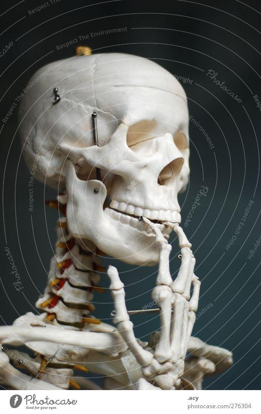 skelett Bildung Wissenschaften Schule Klassenraum hören weiß Skelett Finger dünn lustig Fragen dumm unwissend alt Farbfoto Textfreiraum rechts Textfreiraum oben