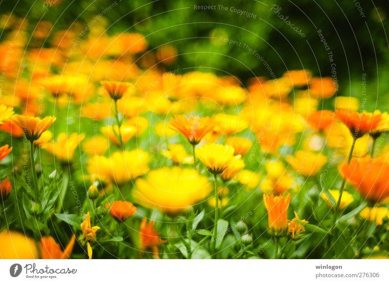 Supper colours Natur grün schön Sommer Pflanze Blume Blatt gelb Umwelt Wiese Herbst Frühling Glück Blüte Garten hell