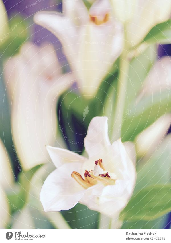 Lilie Lilien Blumen Blumenstrauß Gemälde Natur Pflanze Tulpe Blatt Blüte Grünpflanze Liliengewächse Blühend leuchten ästhetisch Duft exotisch gelb grün orange