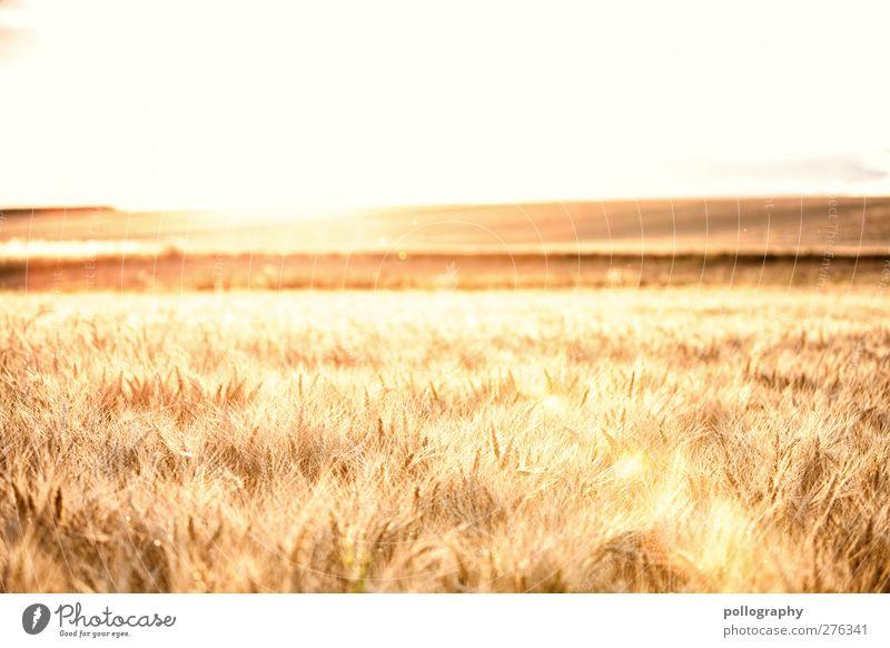 feel the nature (I) Himmel Natur Sommer Pflanze Sonne Landschaft Ferne Ernährung Herbst Freiheit Horizont orange Zufriedenheit Feld Wachstum Ausflug