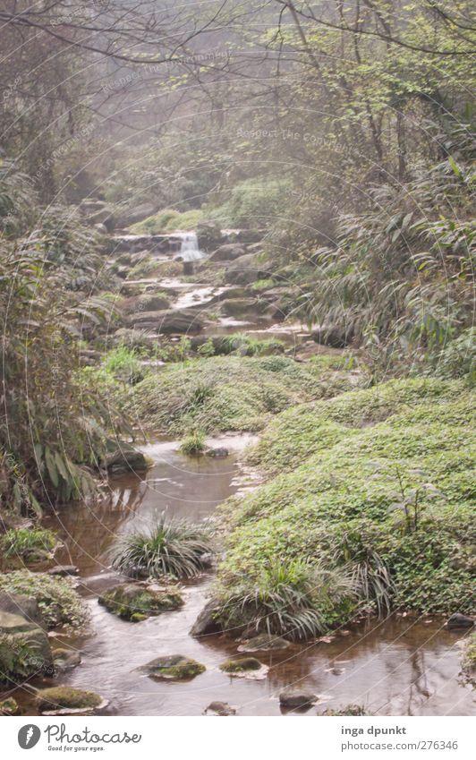 früh Morgens Umwelt Natur Landschaft Pflanze Luft Wasser Frühling Klima schlechtes Wetter Nebel Gras Wald Urwald Flussufer Bach Wasserfall China Sichuan