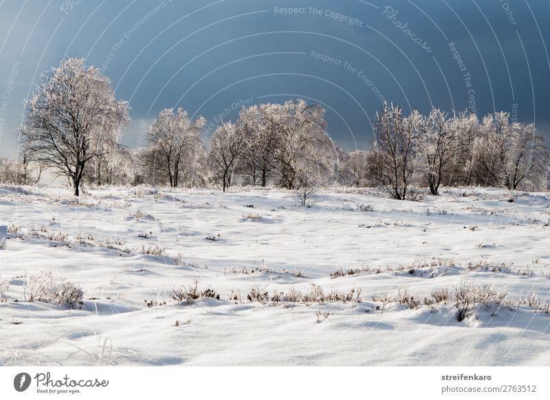 Kühl und wolkig Ferne Winter Schnee Umwelt Natur Landschaft Pflanze Wolken Gewitterwolken Eis Frost Baum Gras Sträucher ästhetisch bedrohlich dunkel kalt blau
