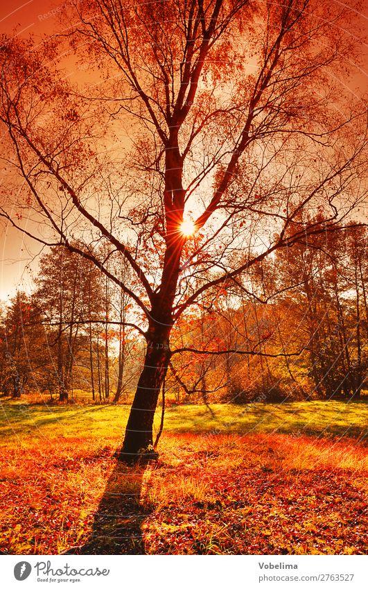 Sonne im Herbstwald Natur Schönes Wetter Baum Wald braun mehrfarbig gelb gold grün orange rot schwarz sonnig Farbfoto Außenaufnahme Abend Licht Schatten