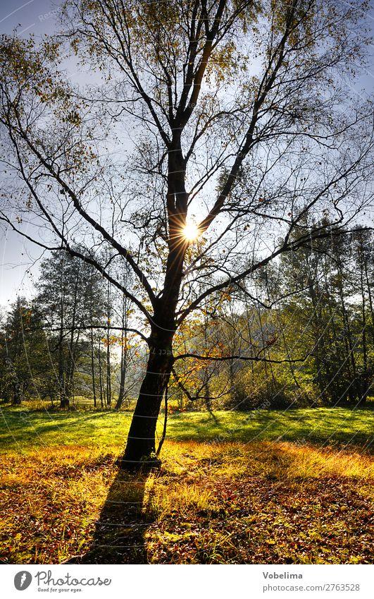Sonne im Herbstwald Natur Landschaft Sonnenlicht Schönes Wetter Baum Wald blau braun mehrfarbig gelb gold grün orange schwarz bäume sonnig Farbfoto