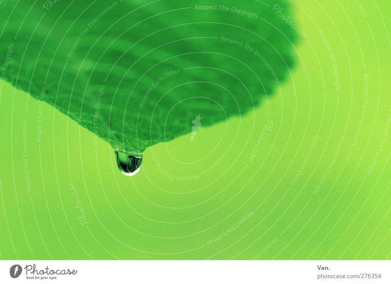 Absprung Natur Pflanze Wassertropfen Regen Blatt Blattadern Garten nass grün Farbfoto mehrfarbig Außenaufnahme Detailaufnahme Makroaufnahme Menschenleer