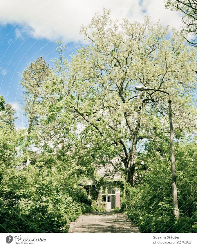 AST5 | Immobilie im Grünen Natur Pflanze Sommer Baum Wildpflanze Garten Park Wald Urwald grün bewachsen Laterne verwachsen urig Unbewohnt Einfahrt Grüner Daumen