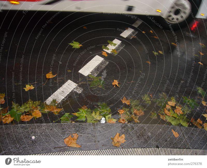 Rechtsabbieger Straße Herbst PKW Linie warten Verkehr fahren Verkehrswege Rad Fahrzeug Herbstlaub Autofahren Reifen Personenverkehr Straßenverkehr