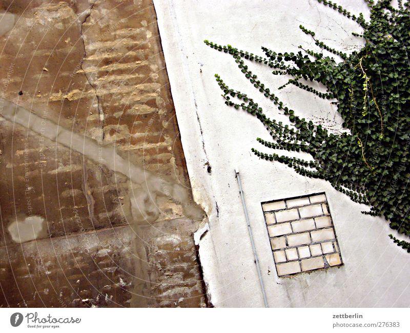 Fassade alt Stadt Pflanze Blatt Fenster Wand Herbst Architektur Mauer Gebäude Ecke Bauwerk Grenze Putz Hälfte