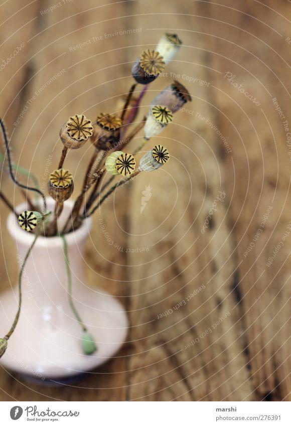 es mohnt so schön Pflanze Holz klein braun Dekoration & Verzierung Mohn Vase Mohnblüte holzig Mohnkapsel