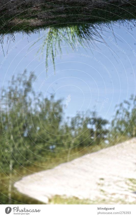 The World Turns Upside Down Natur Pflanze Erde Sand Wasser Himmel Baum Gras Sträucher Seeufer Strand Holz Flüssigkeit nass schön trocken blau grün schwarz weiß